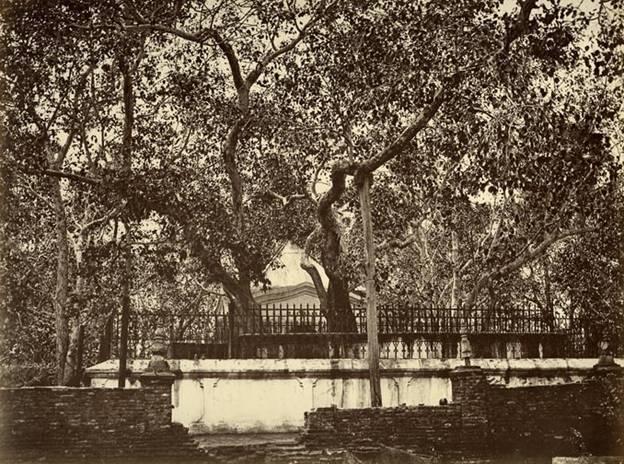 Sri Mahabodiya- Anuradhapuraya